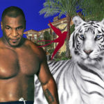 майк тайсон и его тигры