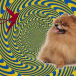 шпиц-гипнотизёр на канале Россия один