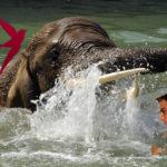 слонёнок спас человека